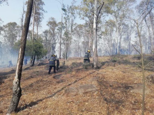 Incendio, Bomberos, XXV Zona Militar, pastizal, alarma, contingencia, afectaciones, zona boscosa, Ejército Nacional