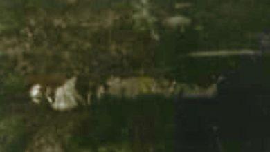 Ejecutado, cinta canela, envuelto, bolsa de plástico, calidad de desconocido, móvil del asesinato, homicidio, San Martín Texmelucan, San Jerónimo Tianguismanalco, Policía Municipal, diligencias