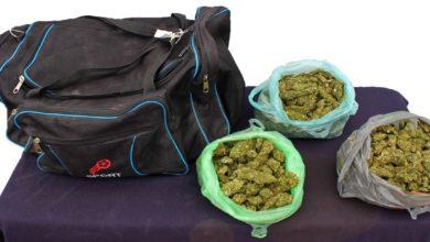 marihuana, CAPU, perro, Policía Municipal, Grupo K-9, 2.5 kilogramos, Querétaro, Orizaba, Veracruz, Enrique Elías, Ministerio Público