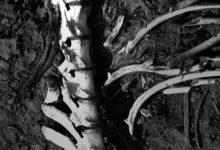 restos humanos, cuerpo, semienterrado, Mixteca Poblana, Santa Ana Guadalupe, Servicio Médico Forense, Acatlán de Osorio, necropsia, varón, identificación, Policía Municipal