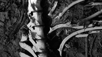 San Salvador Huixcolotla, victimas, terrenos de cultivo, decapitados, El Charmonto, Panteón Municipal, Anfiteatro, Panteón Municipal