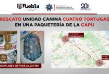 SSPTM, supervisión, paquetería, CAPU, tortugas, Unidad Canina, PROFEPA