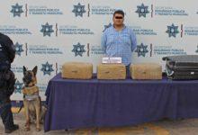 CAPU, SSPTM, Unidad canina, perro, detección, marihuana, maleta, Ministerio Público Federal, Habib, Culiacán, Sinaloa, Veracruz, Xalapa, delitos contra la salud