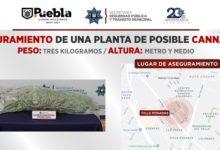 calle Azabache, colonia Villa Posadas, Unidad Canina, Ministerio Público, marihuana, metro y medio, tres kilos, 911