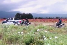 arma de fuego, cadáver, San Salvador El Verde, San Simón Atzizintla, fauna, policía local