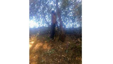 Baleado, colgado, árbol, San Francisco Totimehuacan, Código Rojo, Nota Roja, Puebla, noticias