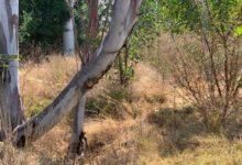 restos humanos, Periférico Ecológico, San Andrés Cholula, cuerpos fragmentados, ciclovía, Fiscalía General del Estado