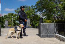 decomiso, drogas, CLaudia Rivera Vivanco, administración, SSC, aseguramiento, Unidad Canina, Código Rojo