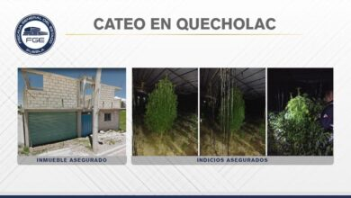 cateo, inmueble, Quecholac, marihuana, aseguramiento, FGE, Código Rojo, Nota Roja, Puebla, Noticias