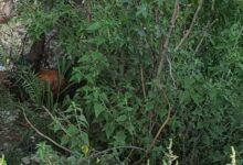 Cadáver, estado de descomposición, Ahuilalco, Protección Civil Municipal, Bomberos, policías, Huixcolotla