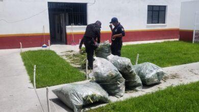 Policías Municipales, campos de cultivo, droga, Huaquechula, marihuana, La Soledad Morelos, Ministerio Público, estupefacientes, siembra