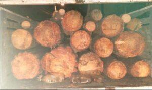 Tala de árboles, ilegal, robo, el cacaloco