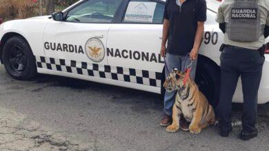 Guardia Nacional de Carreteras, cachorro tigre, PROFEPA, Acatzingo, Chevy, Secretaría de Medio Ambiente, felino