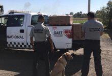 Guadalajara Jalisco, Binomios caninos, marihuana, cajas, artesanías, Guardia Nacional, Ministerio Público