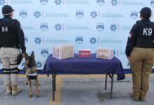 capu, grupo k9, ssc, marihuana, aseguramiento, paquetes, perro, código rojo